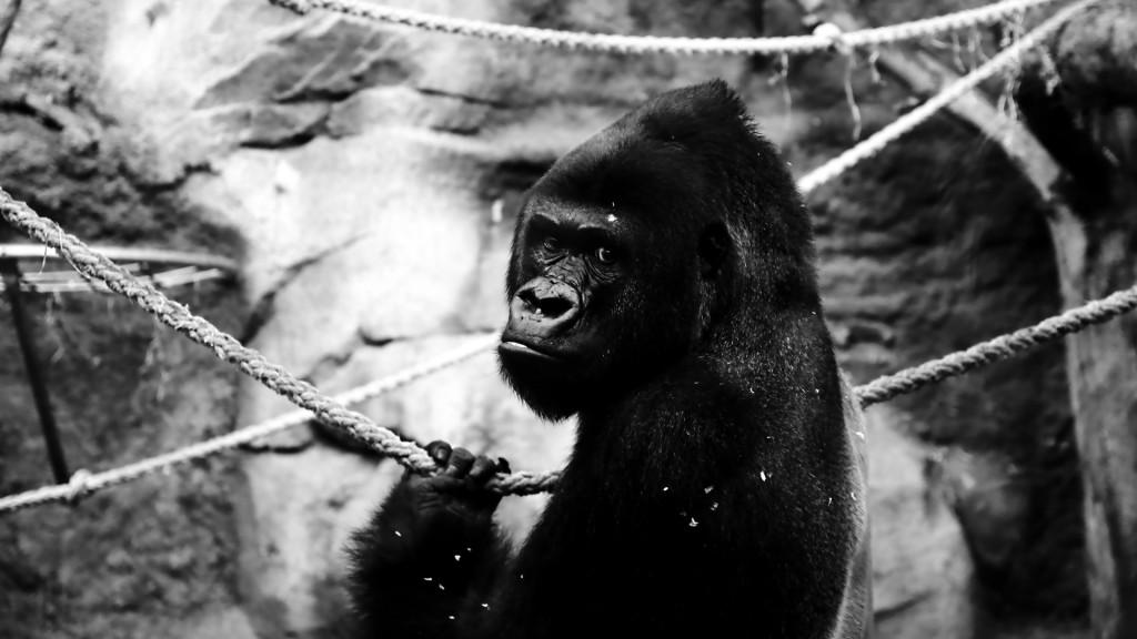 VIATU - Frankfurter Zoo